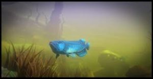 Feed And Grow Fish Full Pc Game + Crack